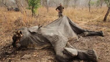 L'Afrique centrale s'engage dans la lutte contre le braconnage