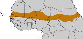 L'ONU réclame 1,1 milliard $ pour faire face à la crise alimentaire et nutritionnelle qui affecte 11,6 millions au Sahel