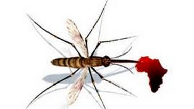 L'Afrique du Sud sur la bonne voie pour éliminer le paludisme