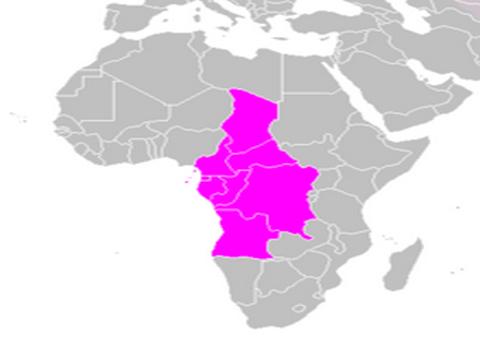 Afrique centrale : les patrons du renseignement en réunion à Libreville contre le terrorisme