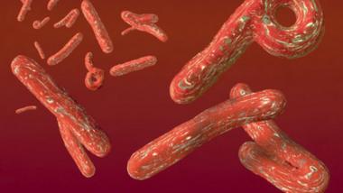 Ebola : l'OMS présente une feuille de route pour renforcer la lutte contre la maladie