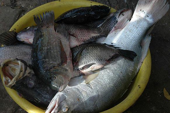 Filière pêche: un secteur qui nécessite protection et encadrement