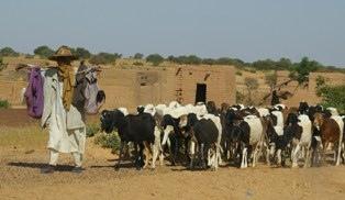 Sahel : le mode de vie des éleveurs nomades est menacé selon le CICR