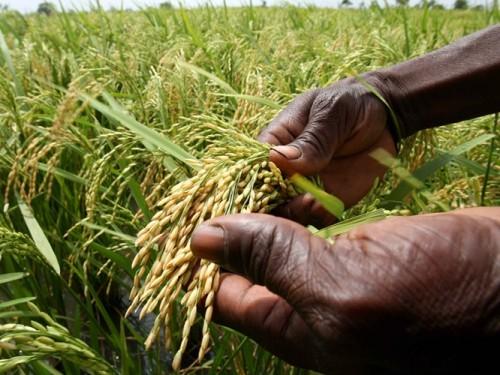Les agriculteurs africains appelés à profiter de la recherche scientifique pour se diversifier