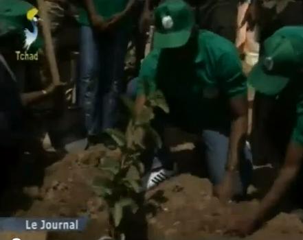 Tchad: lancement de la semaine nationale de l'arbre 2013
