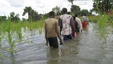 Rebondissement du conflit  dans la Tandjilé: autour de 7 personnes tuées