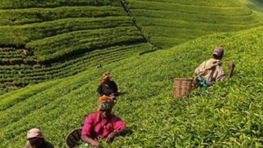 Afrique : le développement durable nécessite l'engagement des populations à faible revenu