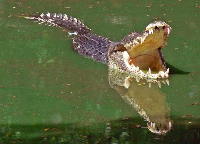 Découvrir le Tchad : Kinasserom l'île aux crocodiles