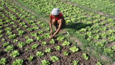 FAO : «  Changeons l'avenir des migrations, investissons dans la sécurité alimentaire et le développement rural »