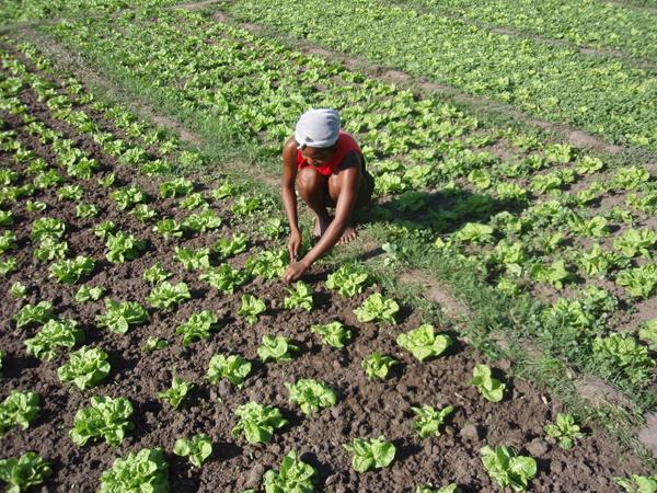 Tchad : la France octroie plus de 2 millions d'euros pour lutter contre l'insécurité alimentaire