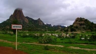 Tchad: la C.T.D.D.H dénonce les violences des agents forestiers effectués dans la région du Guerra
