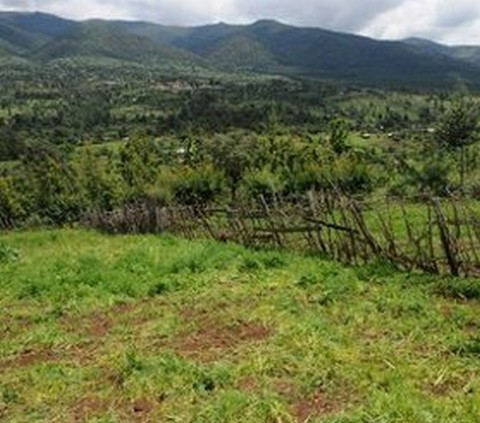 Afrique subsaharienne : 70% des terres cultivables sont inexploités