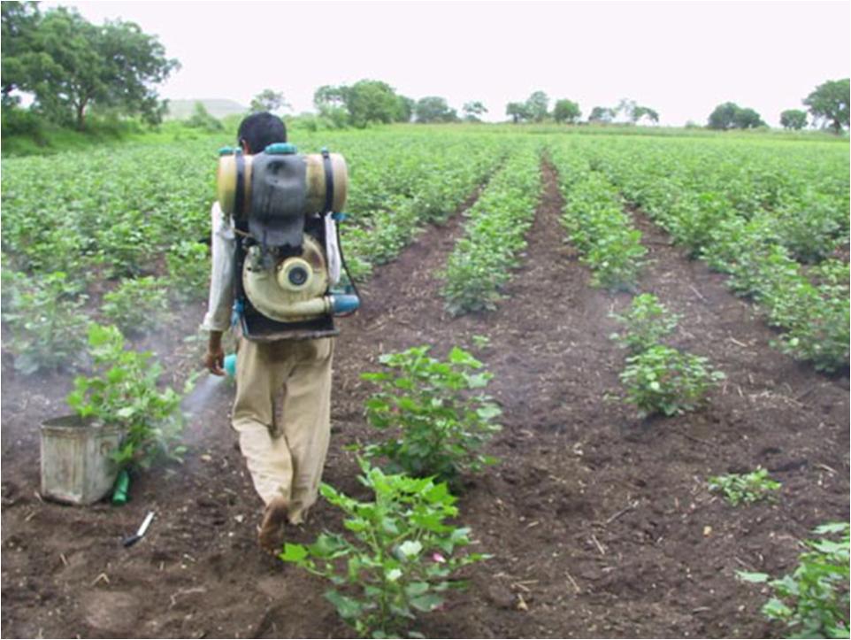 Tchad : 30 000 litres de pesticides offerts au Ouaddaï pour la lutte contre les criquets pèlerins