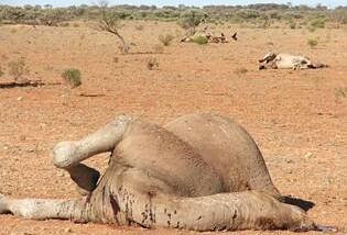 Tchad : prés de 400 dromadaires décimés à Melfi