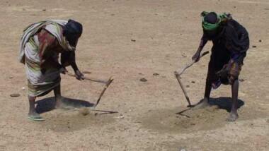 20 % des Africains seraient menacés de faim en 2050