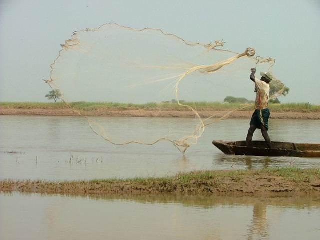 Société : arnaque sur les pêcheurs du fleuve Chari, un réseau démantelé