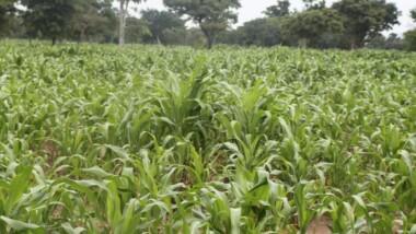 La Campagne agricole 2015-2016 en baisse de 12%