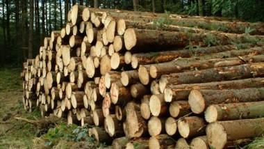 Zone CEMAC : le cacao, le bois et le manganèse en ligne de mire pour atténuer les prix bas du pétrole