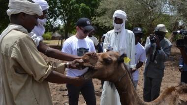 Economie : le Groupement Baghara expérimente l'identification et la traçabilité des animaux au Tchad