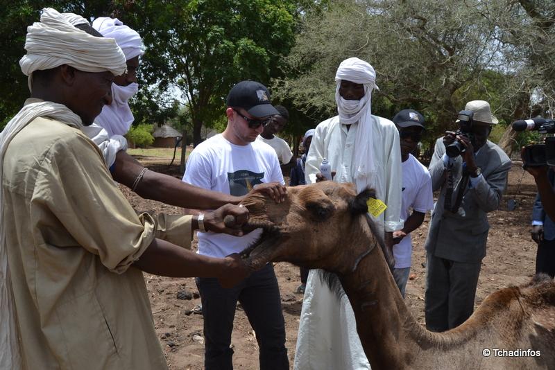 Élevage : Journées de visibilité de l'Association pour la promotion de l'élevage au sahel et en savane