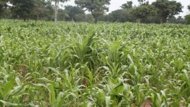 Afrique : l'agriculture commerciale résiste malgré les perturbations dues au COVID-19
