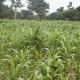 La BAD promet 24 milliards USD de crédits pour soutenir le secteur agricole africain