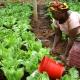 La BAD lance sa stratégie pour révolutionner l'agriculture africaine