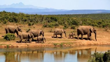 Le Tchad ne compte que 1.500 éléphants