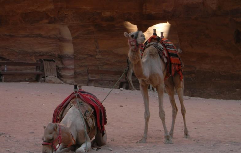 International-Tourisme: baisse importante des chiffres en 2020
