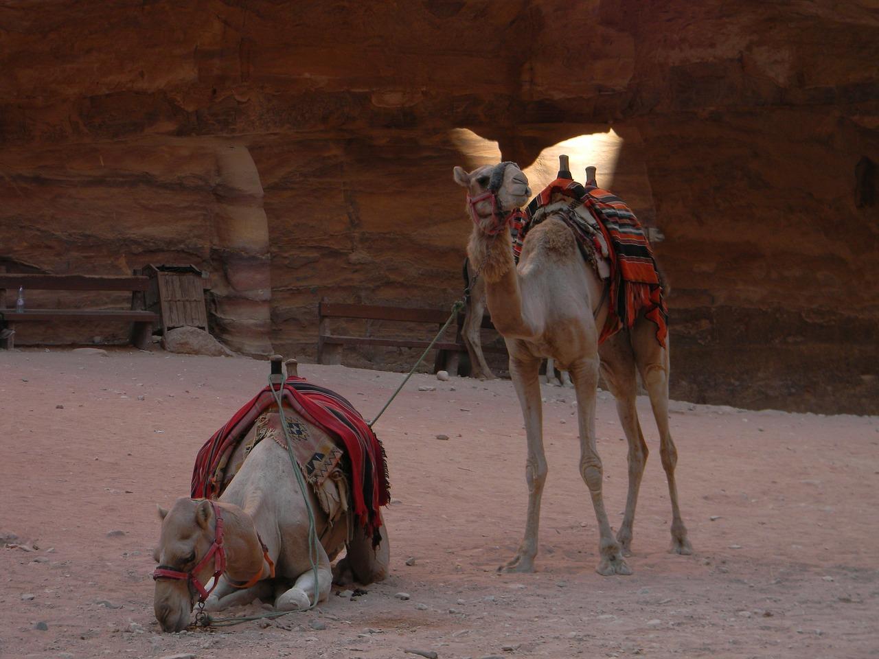 L'OMT continuera à aider l'Afrique à stimuler les arrivées de touristes