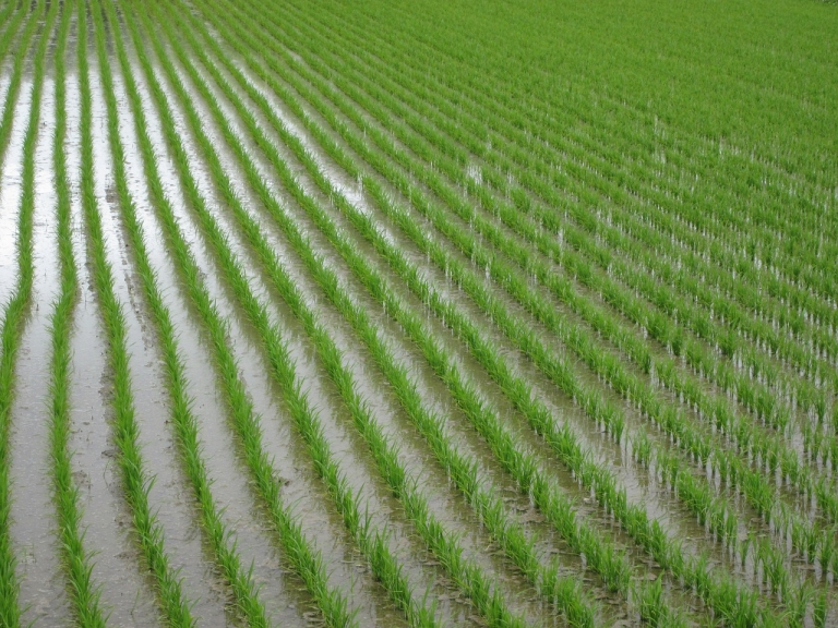 Tchad : l'entreprise chinoise CGCOC va construire deux usines rizicole et sucrière
