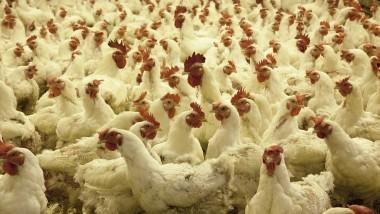 700 poulets en provenance du Cameroun saisis dans la commune du 7ème arrondissement