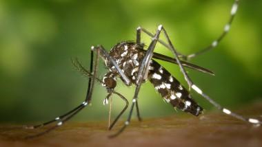 Afrique : premier test à grande échelle pour un vaccin antipaludique