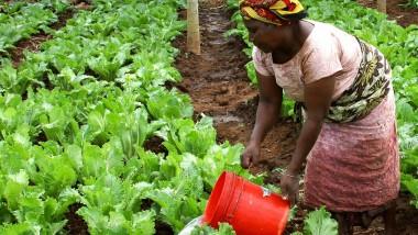 Les pays de l'UA n'ont pas encore réussi à attribuer 10% de leur budget à l'agriculture