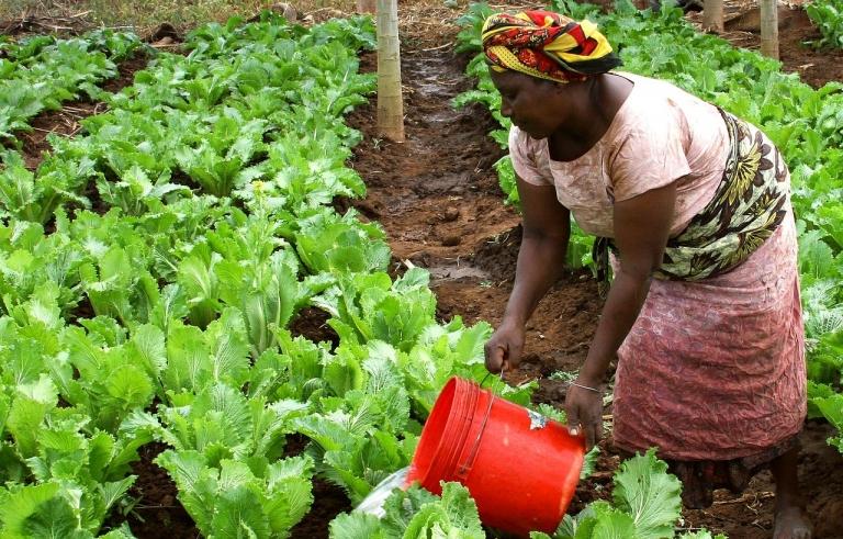 Le chef de l'ONU appelle à renforcer la résilience des femmes rurales face aux crises