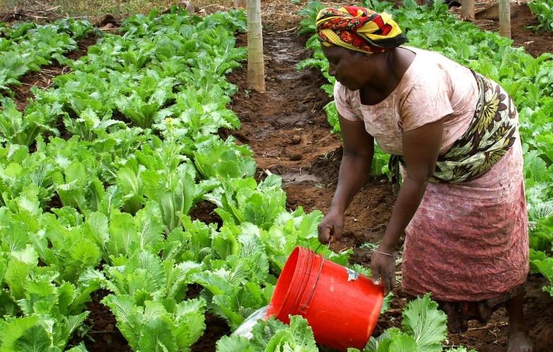 Maroc : 27 pays africains créent une coalition en faveur de l'Adaptation de l'agriculture africaine