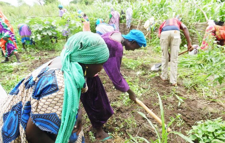 Tchad: Sans salaire depuis 6 mois, les conseillers agricoles de l'ONDR vivent le calvaire