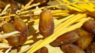 L'Arabie Saoudite alloue un don de 72 tonnes de dattes au PAM
