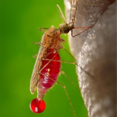 Tchad : vaste campagne de chimio-prévention contre le paludisme
