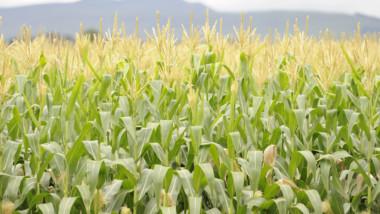 Des pays africains se réuniront à Lomé pour discuter du financement de l'agriculture