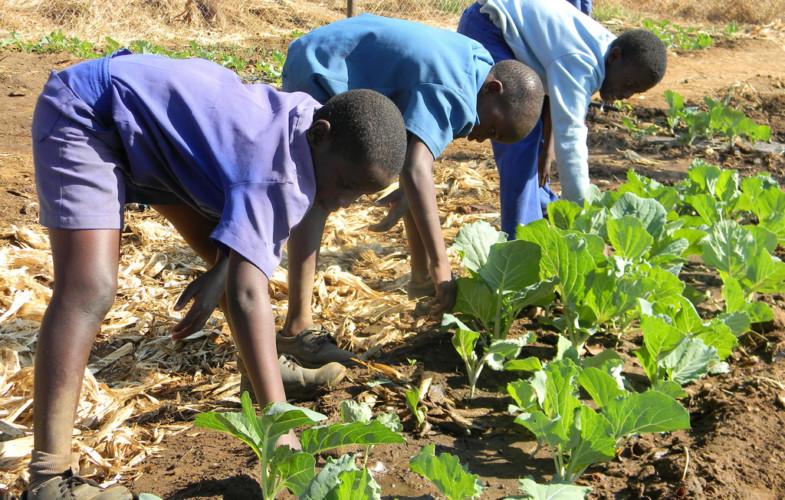 Tchad : « seulement 2,2 millions d'hectares sont exploités sur les 39 millions cultivables » dixit Ferry L. Yanyabé