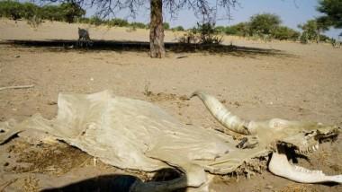 Tchad : Le Gouvernement et le PNUD lancent la formulation du projet ''Gestion Communautaire des Risques Climatiques''