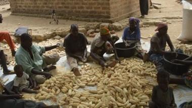 Tchad:304 millions francs CFA accordés aux producteurs du Mayo Kebbi – Est