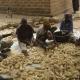FAO-Appui à la production du Maïs et du Niébé : Histoire de vie des bénéficiaires