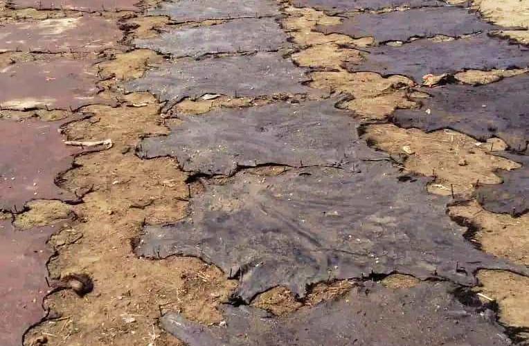 Tchad/Economie : la Filière Cuir, une richesse abandonnée