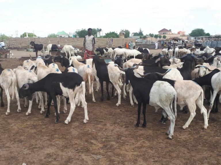 Fête de Ramadan : quand les prix des moutons donnent des vertiges