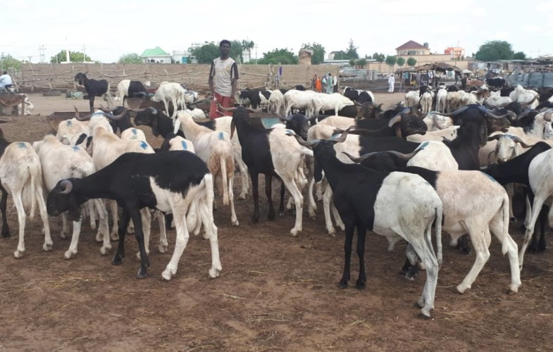 Tchad : le maire Saleh Abdel-Aziz interdit l'élevage des chèvres et moutons dans la ville de N'Djamena