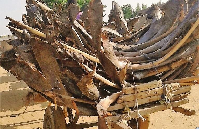 Société : les faux-troncs de palmier rivalisent le gaz butane