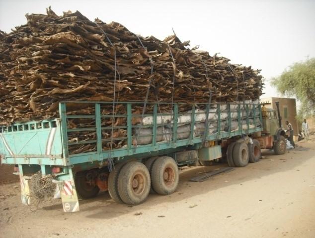 Tchad-Filière Cuir : normaliser l'exportation pour une meilleure rentabilité