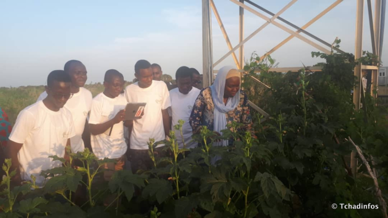 Tchad : un Agro Boot Camp pour booster les compétences des jeunes dans l'agrobusiness